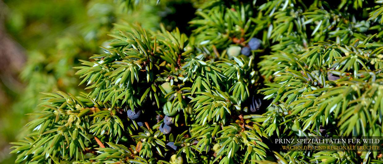 Prinz-Spezialitäten für Wild: Wacholder und regionale Früchte