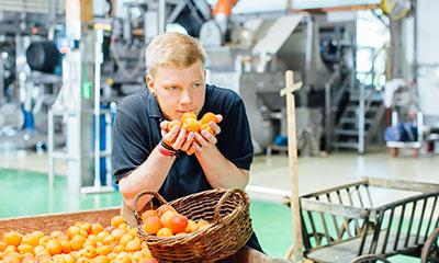 Unsere Obst-Experten kontrollieren alle Marillen auf ihre Qualität