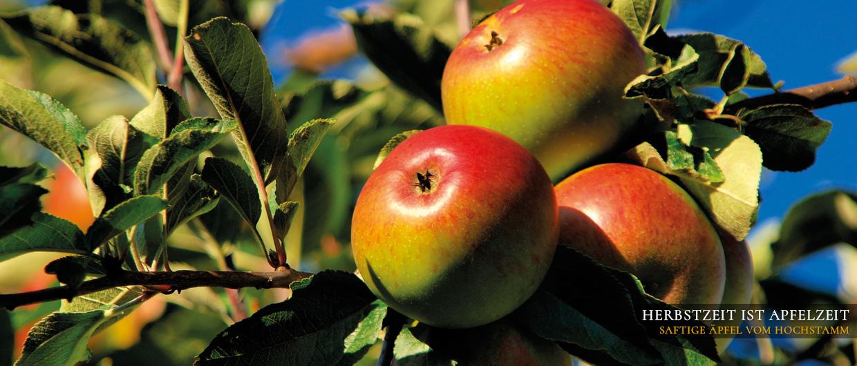 Drei saftige Äpfel am Hochstamm