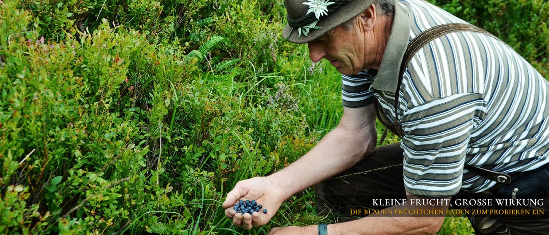 Kleine Frucht, große Wirkung: Die blauen Beeren laden zum Probieren ein