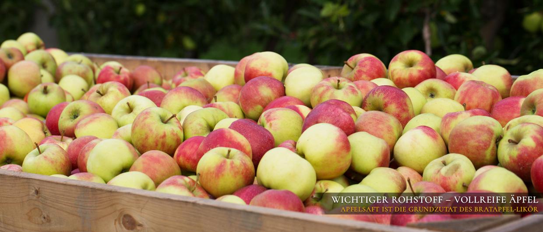 Wichtiger Rohstoff - vollreife Äpfel: Apfelsaft ist die Grundzutat des Bratapfel-Likörs