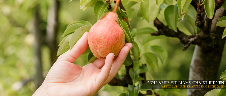Vollreife Williams Christbirnen: saftig-süß und kräftig im Geschmack